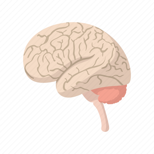 anatomy, brain, cartoon, cerebellum, health, human, science icon