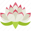 lotus, flower, yoga, meditation, nature, healthy, relaxation