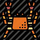 crab, food, japan, spider icon