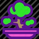 asia, bio, bonsai, china, green, plant