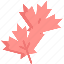 autumn, japan, japanese, leaves, maple, nature, plant