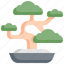 bonsai, environment, green, japan, nature, plant, tree