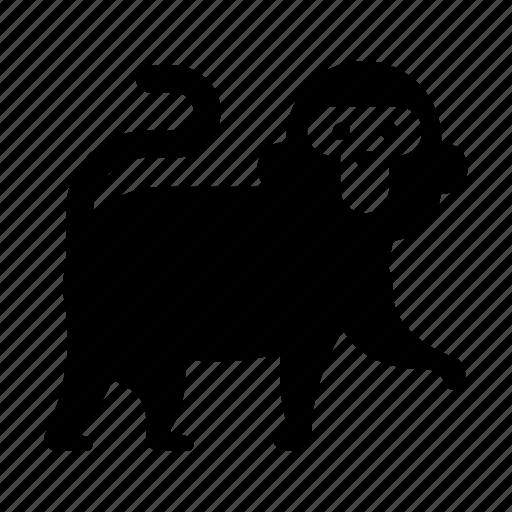 animal, japan, japanese, japanese monkey, monkey, nature, wildlife icon