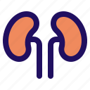 anatomy, body, human, kidney, organ icon