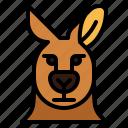 kangaroo, animal, mammal, head, macropus