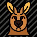 kangaroo, sad, animal, mammal, head