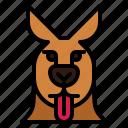 kangaroo, tongue, out, animal, mammal, head