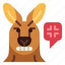 kangaroo, angry, animal, mammal, head