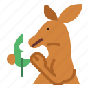 kangaroo, eat, animal, mammal, macropus