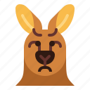 kangaroo, sad, animal, mammal, head