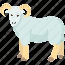 ram, horn, wildlife, animal, mammal