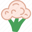 broccoli, drink, food, grocery, kitchen, restaurant icon