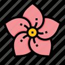 culture, flora, flower, korea, mugunghwa