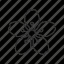 blossom, flower, cherry, asian