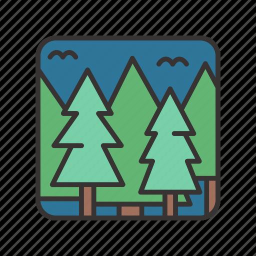 forest, jungle, landscape, night icon