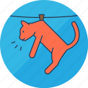 animal, animals, cat, hang, laundry, pet, washing icon
