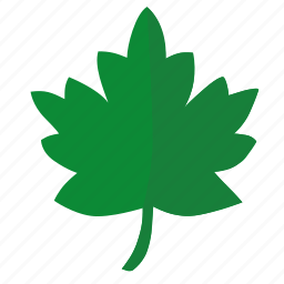 green, label, leaf, oak, sign, tree icon