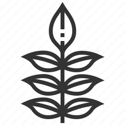 ash, leaf, leaves, nature, plant icon