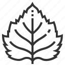 birch, leaf, leaves, nature, plant icon
