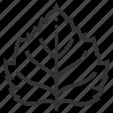 birch, leaf, leaves, nature, plant