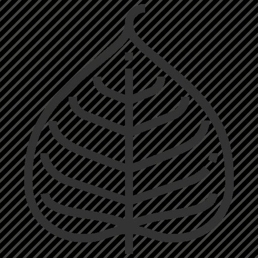 bodhi, leaf, leaves, tree icon