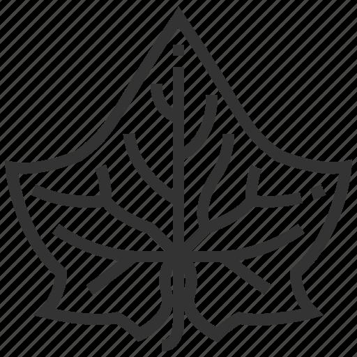 cucumber, leaf, leaves, nature, plant, tree icon