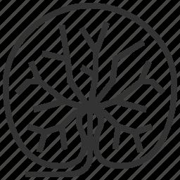 gotu, kola, leaf, leaves, plant icon