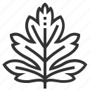 hawthorn, leaf, leaves, nature, plant, tree icon