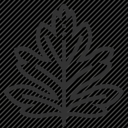 hawthorn, leaf, leaves, nature, plant, tree icon