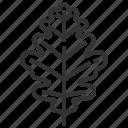 oak, leaf, leaves, tree