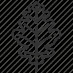leaf, leaves, oak, tree icon