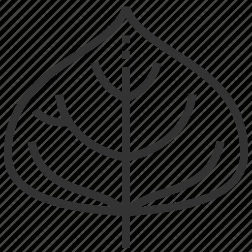 leaf, leaves, plant, poplar icon