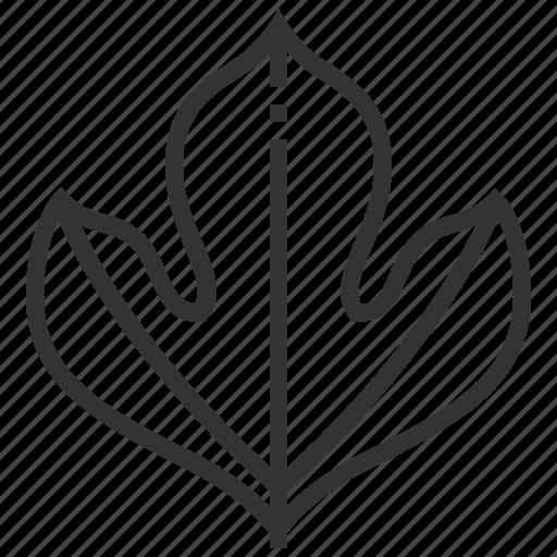 leaf, leaves, plant, sassafras icon