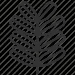 leaf, leaves, plant, tamarind icon
