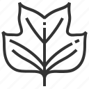 leaf, leaves, sign, tulipifera icon
