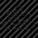 tree, monstera, leaf, plant, nature