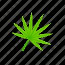 fan-shaped, green, leaf, summer