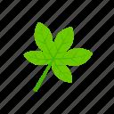 green, leaf, palmatifid, summer