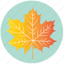 leaf, yellow, autumn, ecology, forest, maple, nature icon