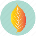 autumn, ecology, elm, leaf, nature, plant, yellow icon