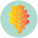 autumn, garden, leaf, nature, oak, plant, yellow icon