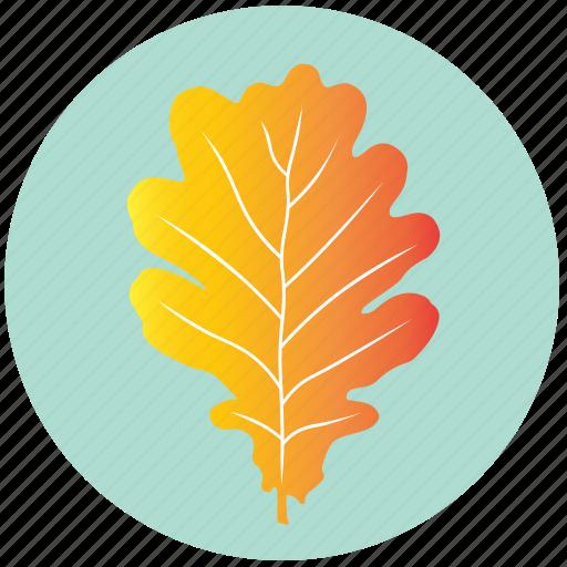 autumn, garden, leaf, nature, oak, plant, yellow icon
