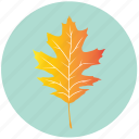 leaf, yellow, autumn, eco, maple, nature, plant icon