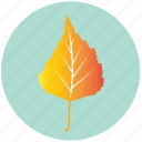 autumn, birch, forest, leaf, nature, tree, yellow icon