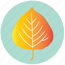 leaf, yellow, aspen, autumn, ecology, garden, nature icon