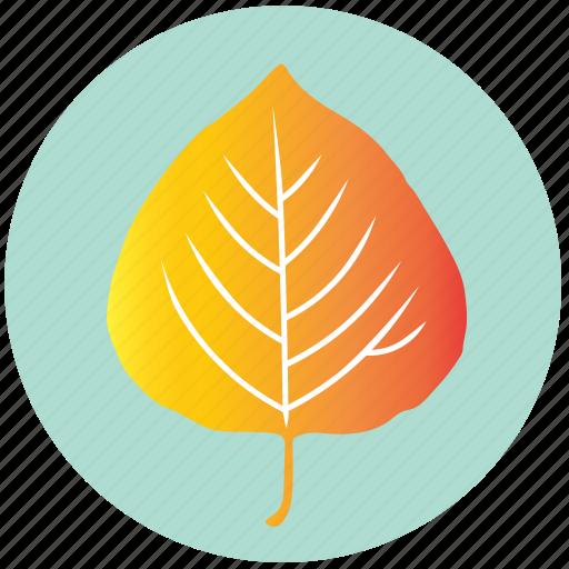 aspen, autumn, ecology, garden, leaf, nature, yellow icon