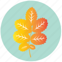 leaf, yellow, autumn, dog-rose, garden, rose, tree icon