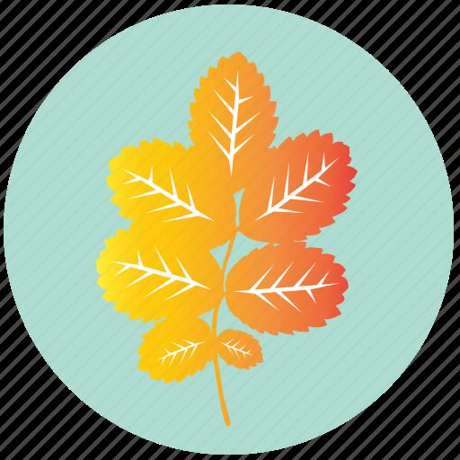 autumn, dog-rose, garden, leaf, rose, tree, yellow icon