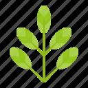 green, leaf, leaves, nature, plant, tree
