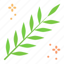 acacia, easter, flora, leaves, lent, spring, twig